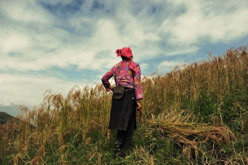 Une femme travaille dans la rizière