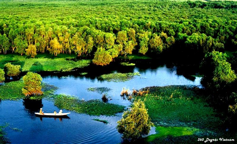 La forêt de cajeputiers de Tra Su