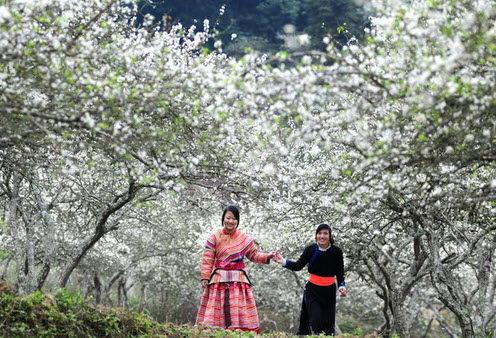 Sapa est une destination préférée par non seulement des visiteurs étrangers mais aussi les vietnamiens