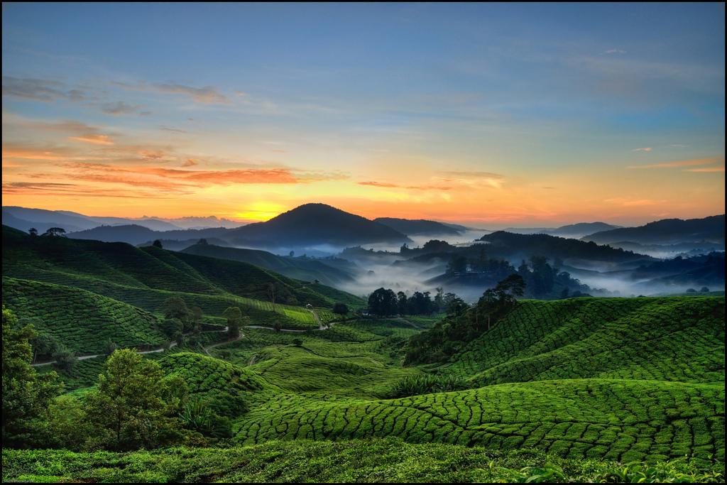 Plateau de Cameron - Malaisie