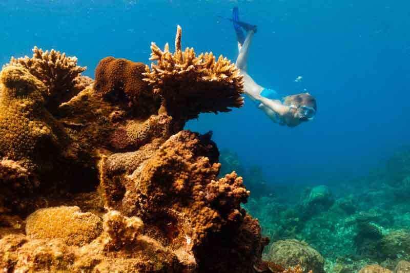 Plongée sous marine à Con Dao