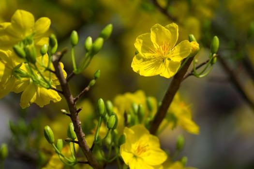 tet fleurs vietnam