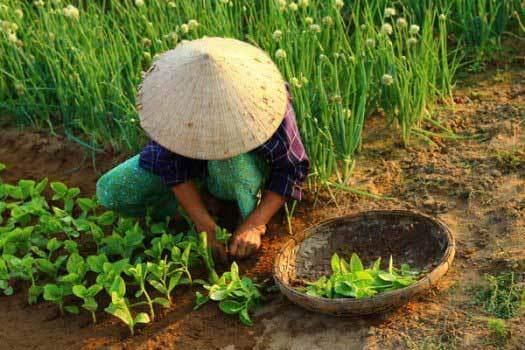 potager vietnam