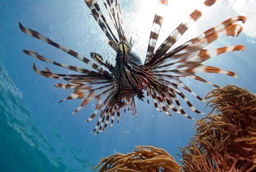 Des fonds protégés qui ravissent les plongeurs