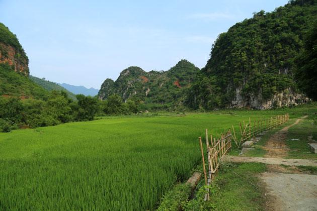 Pains de sucre et vertes rizières