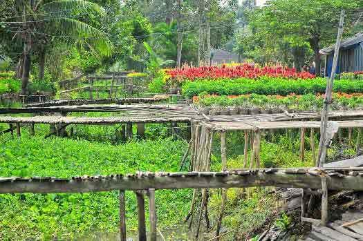 Village de fleur de Sa Dec Delta du Mékong