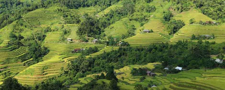 Rizières en terrasse à Muong Khuong, Lao Cai
