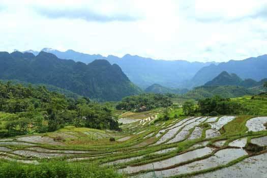 Rizières en terrasse à Pu Luong Thanh Hoa