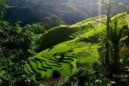 rizieres en terrasse mu cang chai