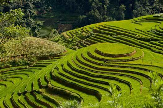 Rizieres en terrasse à Mu Cang Chai, nord ouest du Vietnam
