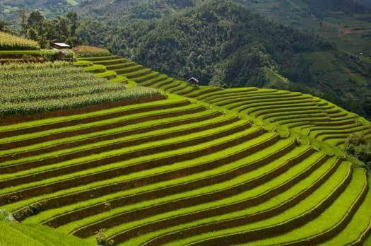Rizieres en terrasse au nord ouest du Vietnam