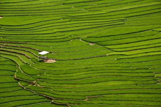 rizières nord vietnam