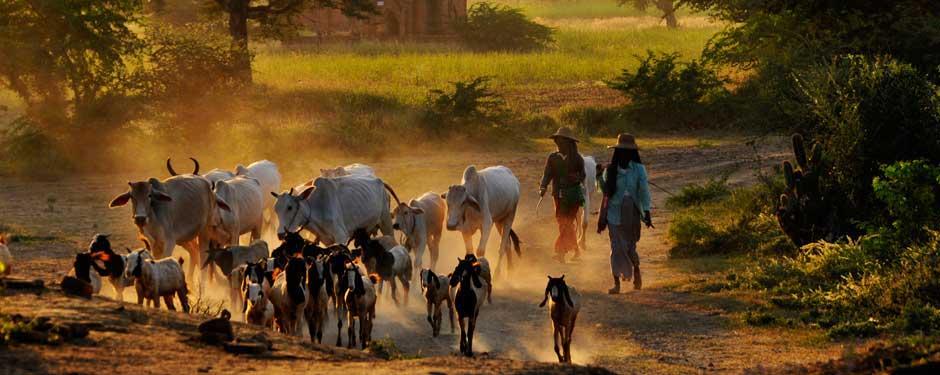 Voyage en Birmanie : Un pied devant l'autre