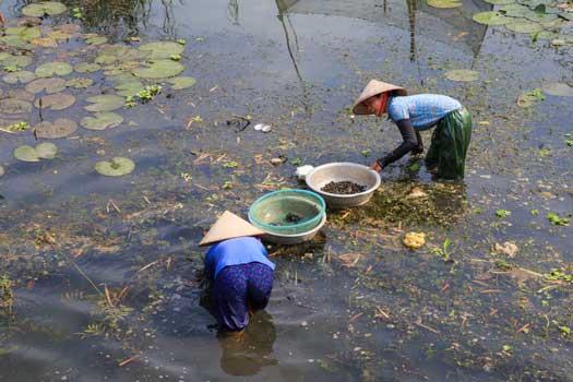 Chercher des escargots et des huitres d'eau douce