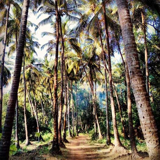 ben tre cocotiers delta du mekong