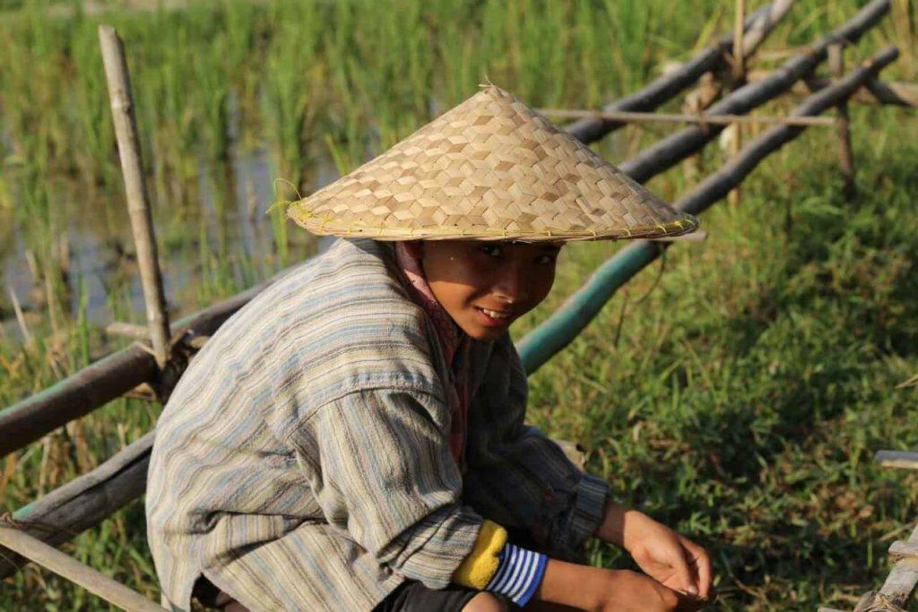 riziculture luang prabang
