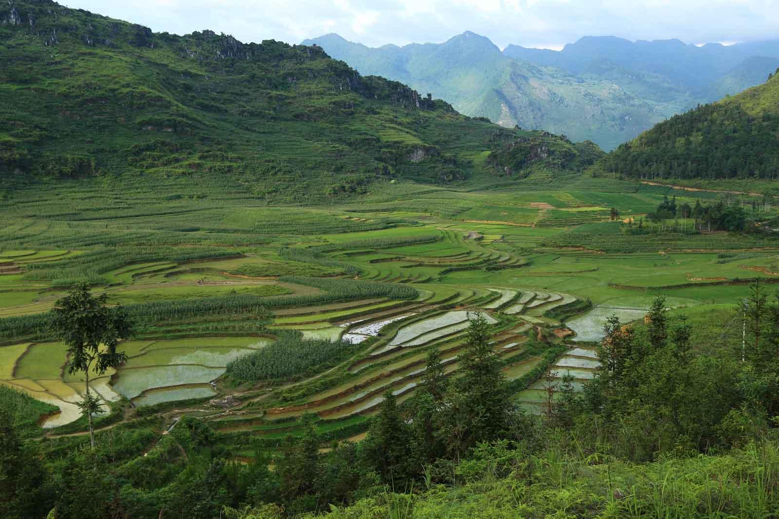 Rizières en terrasse derrière le village