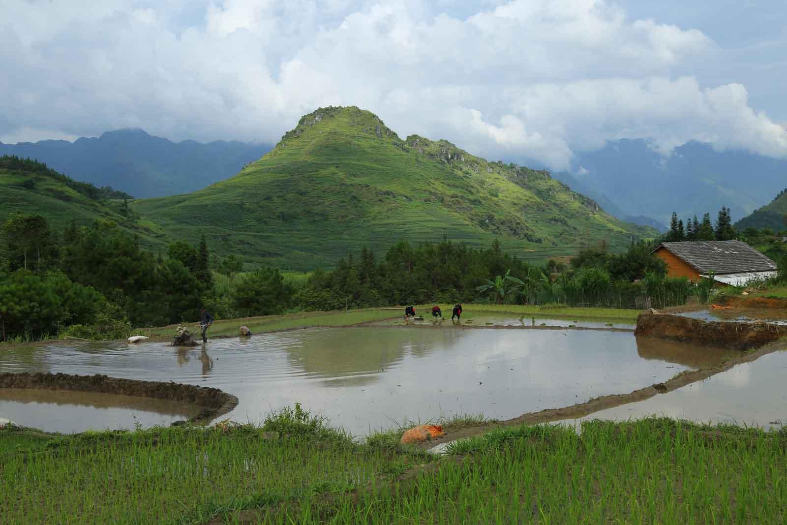 Travaux rizicoles au village de Nam Dam, Ha Giang