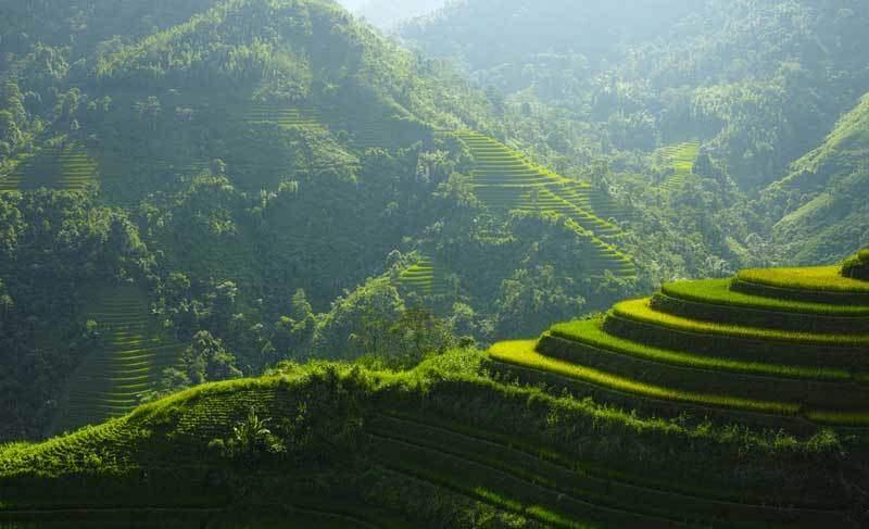 Saison verte des rizières en terrasse