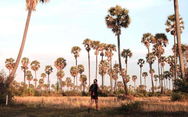 Course à pied dans les rizières piquées de palmiers à sucre
